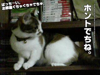 135_5.jpg