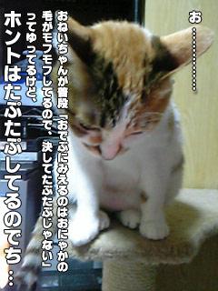 137_5.jpg