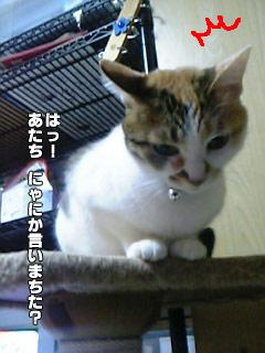 137_6.jpg