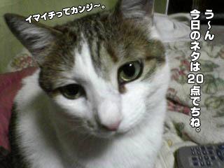 139_3.jpg