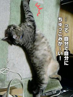 148_4.jpg