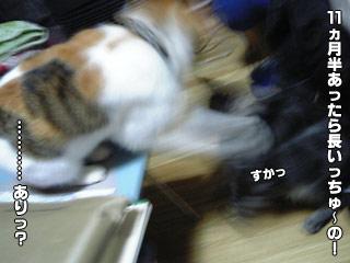 161_4.jpg