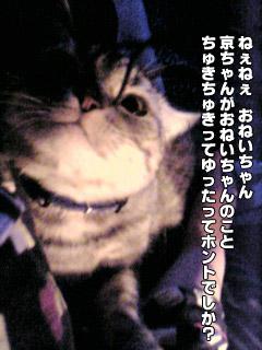 176_1.jpg