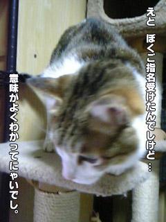 183_1.jpg