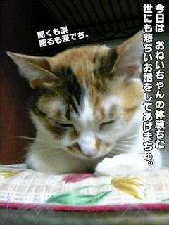 185_1.jpg