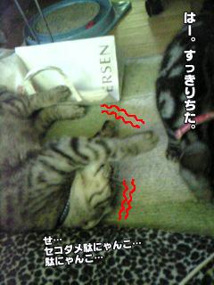 215_11.jpg