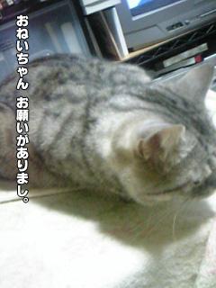 225_2.jpg