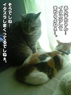 227_5.jpg