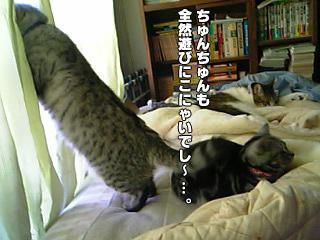 242_2.jpg