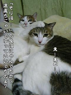 247_6.jpg