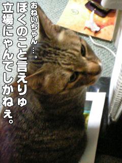248_6.jpg