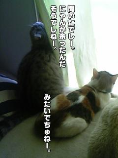 253_3.jpg