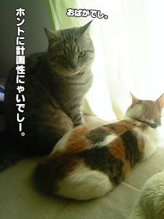 253_5.jpg