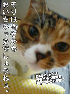 262_10.jpg
