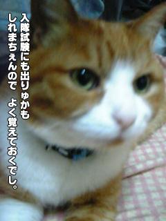 265_03.jpg