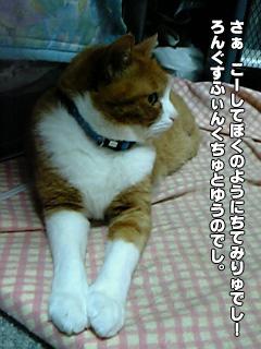 265_05.jpg