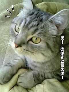 265_11.jpg