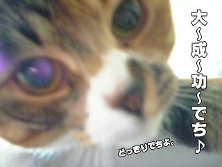 266_5.jpg