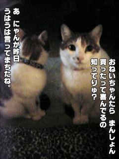 268_3.jpg