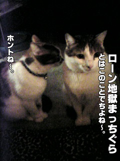 268_6.jpg