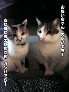268_8.jpg