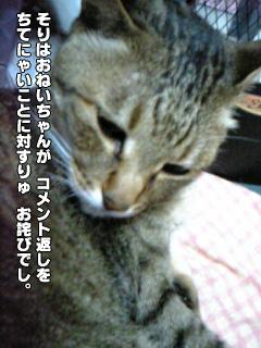271_02.jpg
