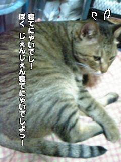 271_10.jpg