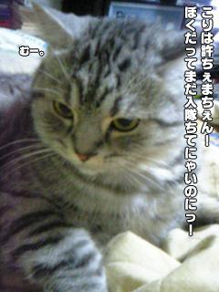 275_04.jpg
