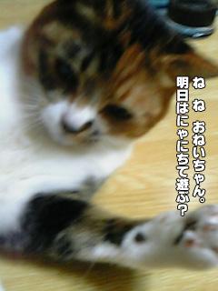 277_1.jpg