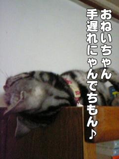 293_7.jpg