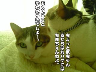 309_2.jpg