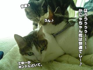 309_3.jpg