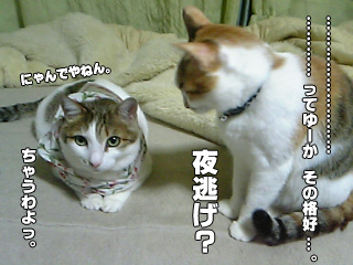 312_3.jpg