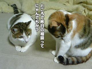 313_1.jpg