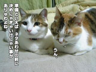 313_5.jpg