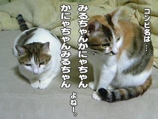313_6.jpg