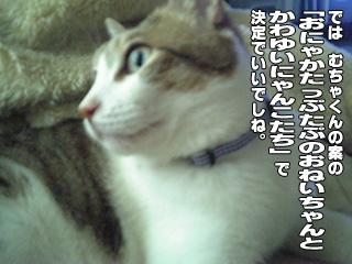317_1.jpg