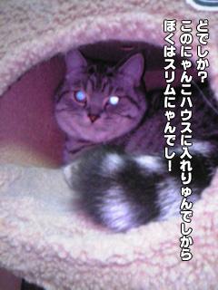 319_4.jpg