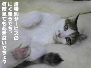 31_3.jpg