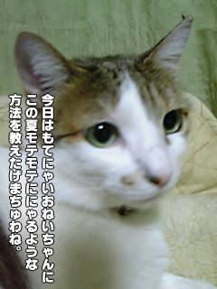 320_1.jpg