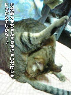 328_4.jpg