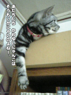 329_4.jpg