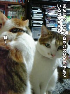 335_2.jpg