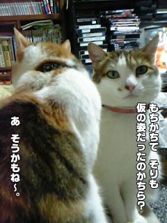 335_3.jpg
