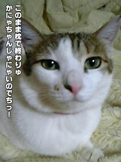 342_2.jpg