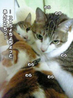 342_4.jpg