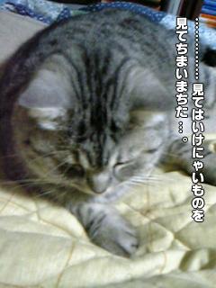 343_3.jpg