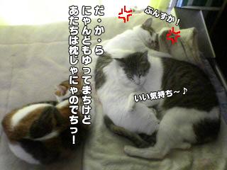 345_2.jpg