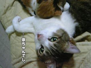 348_5.jpg
