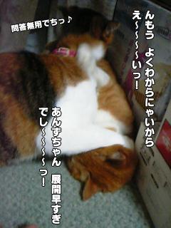 355_6.jpg